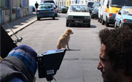 """A shot from """"Shooting Dogs"""" a film by a a production company making documentary film.A shot from """"Shooting Dogs"""" a film by a a production company making documentary film."""